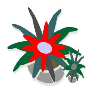 Botanical Archetyes_Fascicularia