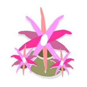 Botanical Archetype_Cryptanthus
