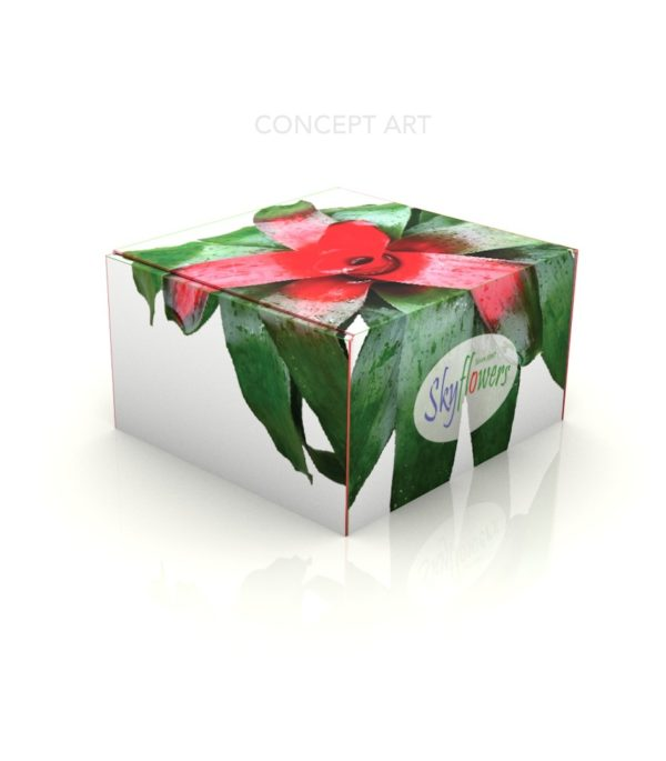 Packaging Box_Concept Art